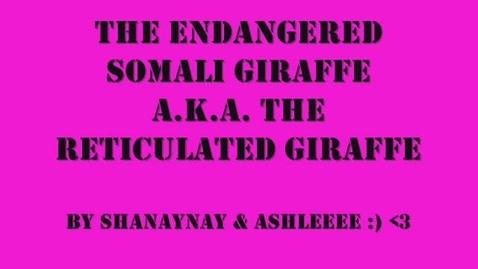 Thumbnail for entry Endangered Girraffes by Shaelan and Ashlyn