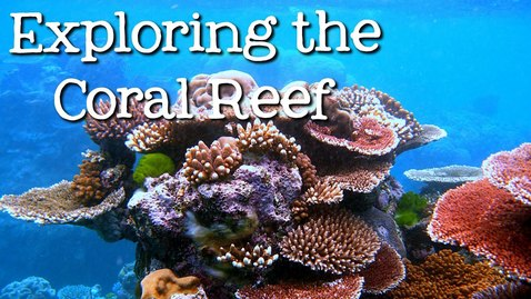 Thumbnail for entry Exploring the Coral Reef: Learn about Oceans for Kids - FreeSchool