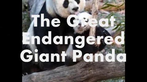 Thumbnail for entry The Giant Panda by Kathy and Sofia