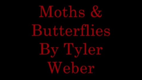 Thumbnail for entry Moths & Butterflies