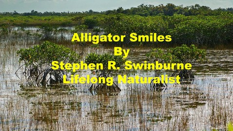 Thumbnail for entry Alligator Smiles by Stephen R. Swinburne, Lifelong Naturalist