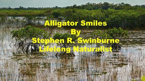 Thumbnail for entry Alligator Smiles by Stephen R. Swinburne, Lifelong Naturalist