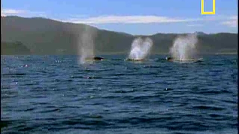 Thumbnail for entry Gray Whale Migration