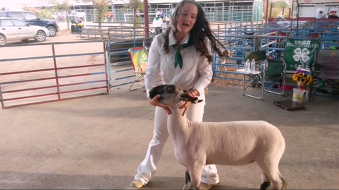 Thumbnail for entry Lamb Showmanship 101