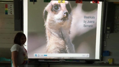 Thumbnail for entry Juana Serrano Meerkats research project