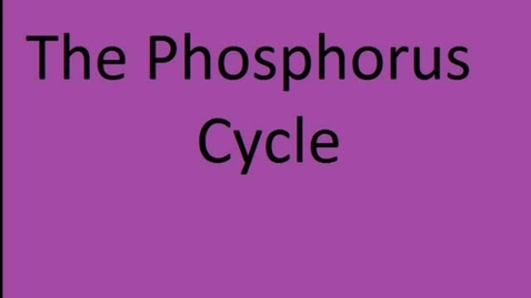 Thumbnail for entry Phosphorus Cycle