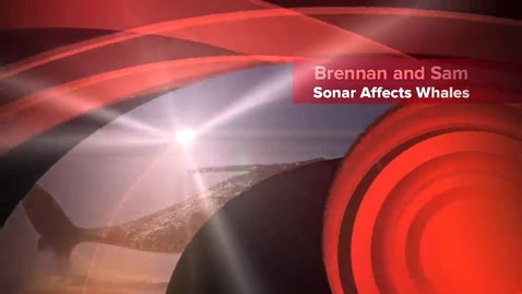 Thumbnail for entry Sonar and Its Affect on Whales