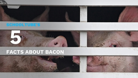 Thumbnail for entry SchoolTube's 5 Facts About Bacon