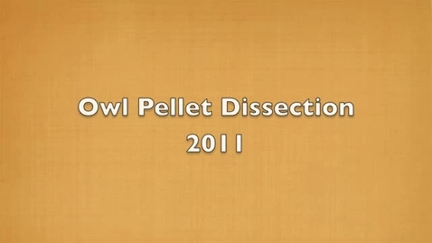 Thumbnail for entry Owl Pellet Dissection