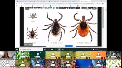 Thumbnail for entry Symbiotic relationships Live Lesson WITH Students