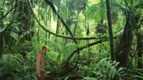 Thumbnail for entry Green Screen, Logan Johnke