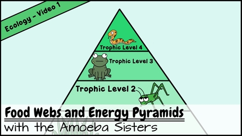 Thumbnail for entry Food Webs and Energy Pyramids: Bedrocks of Biodiversity