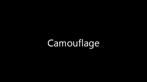 Thumbnail for entry Camouflage