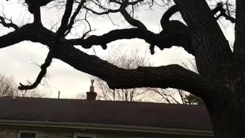 Thumbnail for entry 5-18-20-morning greeting & daily greeting (tree)