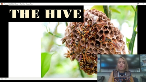 Thumbnail for entry The hive video presentation