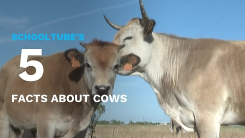 Thumbnail for entry SchoolTube's 5 Facts About Cows