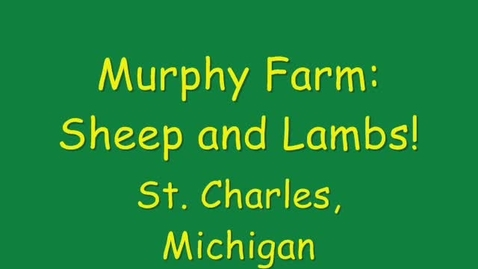 Thumbnail for entry Murphy Farm: Sheep and Lambs
