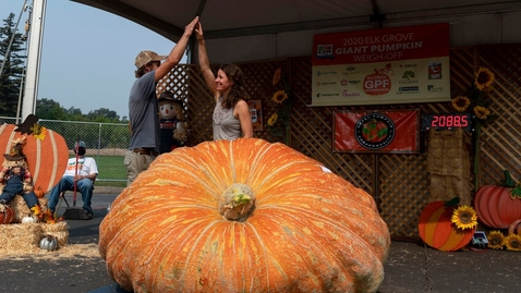 Thumbnail for entry 'I'm kind of in shock.' See the 2,089-pound winner of Elk Grove's Giant Pumpkin Festival
