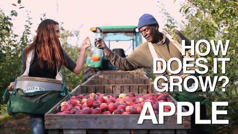 Thumbnail for entry APPLE | How Does it Grow?