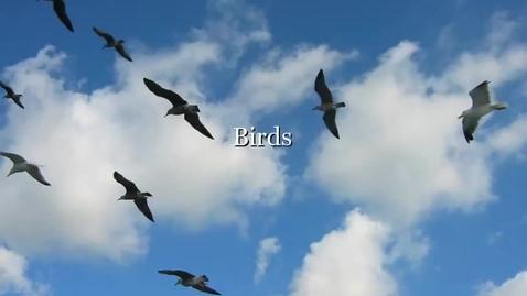 Thumbnail for entry Birds