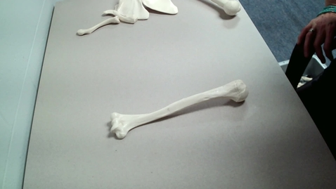 Thumbnail for entry Humerus Lesson