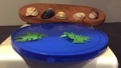 Thumbnail for entry 5 Pretty Seashells