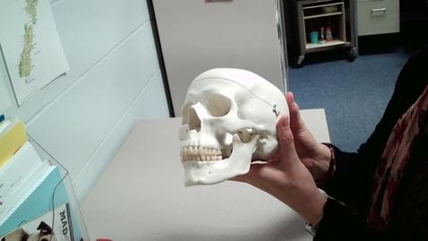 Thumbnail for entry Skull Practice Quiz