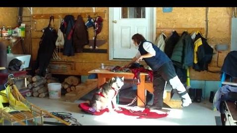 Thumbnail for entry Dog Sledding