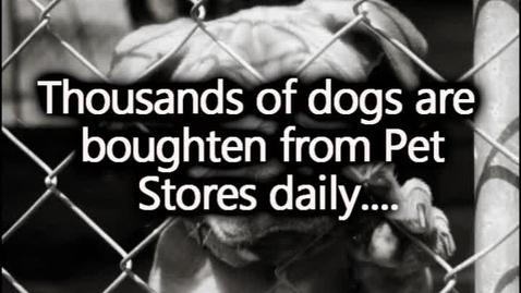 Thumbnail for entry Peta Animal Cruelty
