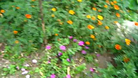 Thumbnail for entry Korean Gardens 22