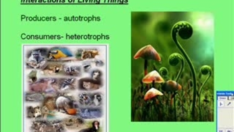 Thumbnail for entry Ecology Ch 12 interactions of living things