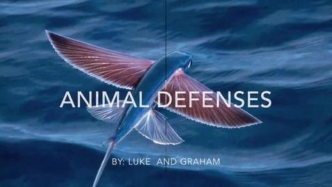 Thumbnail for entry Animal Defenses