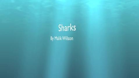 Thumbnail for entry Malik W. Sharks