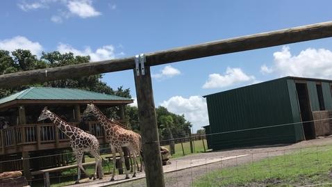 Thumbnail for entry Wild Florida Safari 16