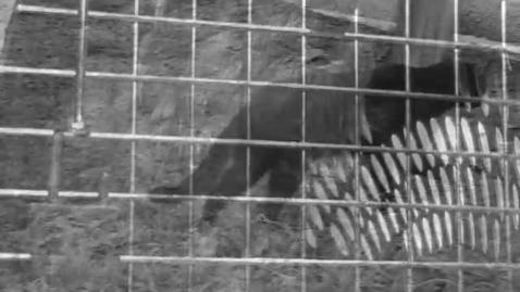 Thumbnail for entry PSA Against Animal Abuse