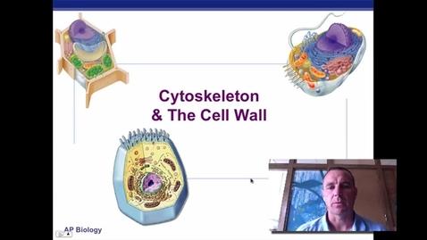 Thumbnail for entry Cytoskeleton