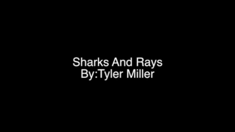 Thumbnail for entry Sharks And Sting Rays