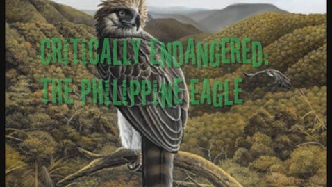 Thumbnail for entry Philippine eagle by Mara