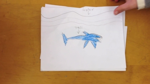 Thumbnail for entry Grade 1 Animal Research - Sharks 2