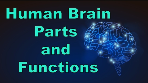 Thumbnail for entry Human Brain | Parts & Functions | Cerebrum & Cerebellum | Biology | LetsTute