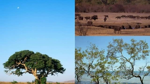 Thumbnail for entry Savanna Animals