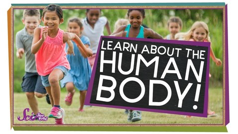 Thumbnail for entry All About Your Body! | Human Body Compilation