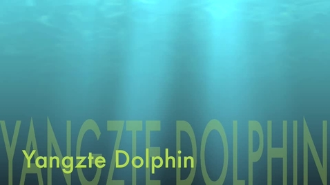 Thumbnail for entry Yangzte River Dolphin