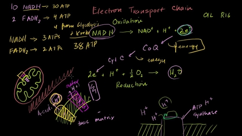 Thumbnail for entry Oxidative Phosphorolation and Chemiosmosis