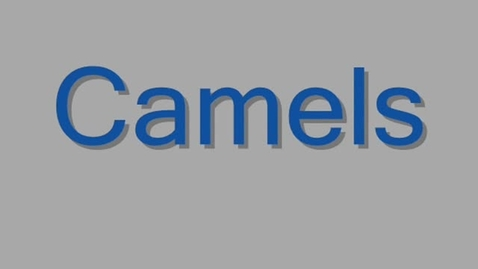 Thumbnail for entry Camels