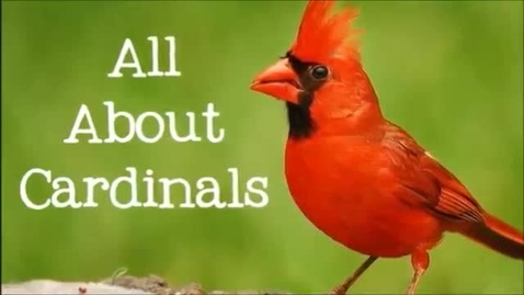 Thumbnail for entry Cardinals