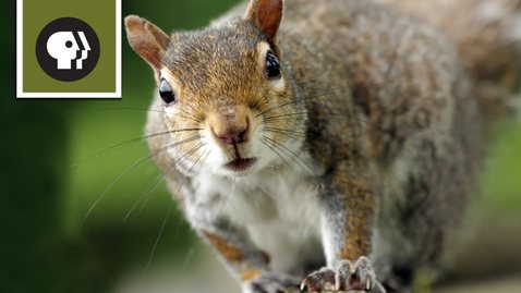 Thumbnail for entry Squirrel Obstacle Course
