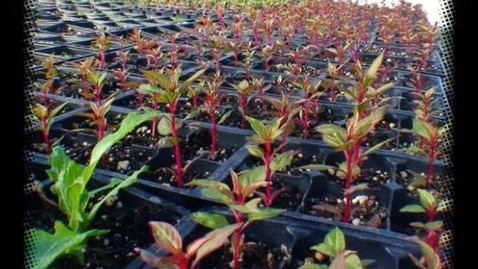 Thumbnail for entry Planting Plugs