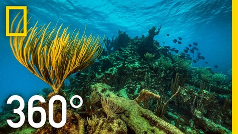 Thumbnail for entry 360° Underwater National Park | National Geographic