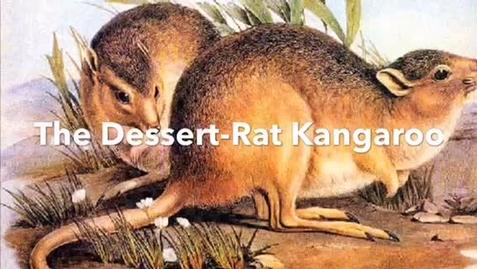 Thumbnail for entry Averie8 Desert-Rat Kangaroo